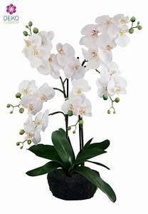 Künstliche Orchideen Im Topf : k nstliche orchidee im topf wei 62 cm ~ Watch28wear.com Haus und Dekorationen