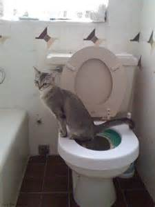 potty your cat can you potty your kitty siamese cat spot