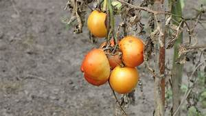 Free Images   Branch  Fruit  Flower  Food  Produce