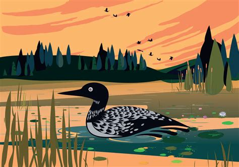 loon swimming  lake vector background illustration
