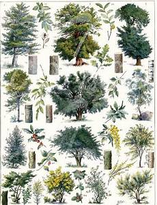 antique french illustration botanical forest by FrenchFrouFrou