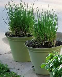 Herbes Aromatiques En Pot : plante aromatique mettez du go t dans votre int rieur ~ Premium-room.com Idées de Décoration
