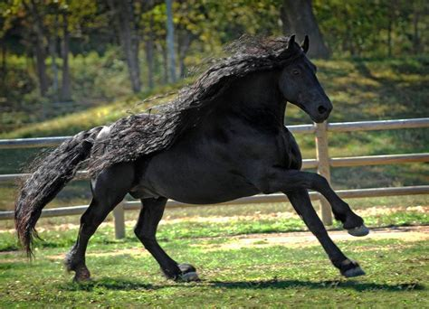 horse stallion most beauty frederik brighten