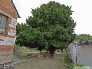 Baum Fällen Kosten Forum : eibe in tastungen ~ Jslefanu.com Haus und Dekorationen