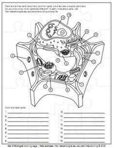 cells blank plant  animal cell diagrams  label note