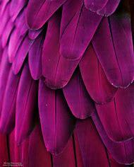 Pink Purple and Magenta