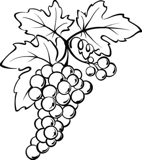 fresh fruit grapes coloring pages color luna