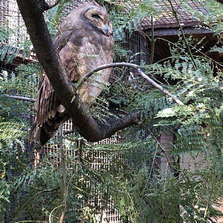 johannesburg zoo tripadvisor attraction africa south