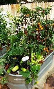 Container Vegetable Garden On Your Patio GardenCampus