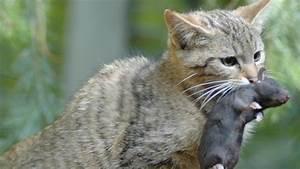 Was Fressen Ratten : sch dlingsbek mpfung das gift im rattenpelz archiv ~ One.caynefoto.club Haus und Dekorationen