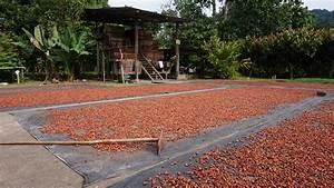 Drying Cocoa  U2013 Eth Ambassadors