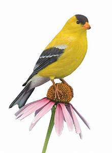KIT-AMERICAN GOLD FINCH WOOD CARVING KIT