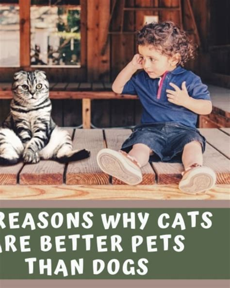 cats why reasons dogs better than pets
