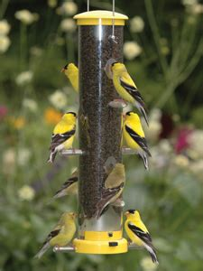 wbu medium quick clean finch feeder yellow