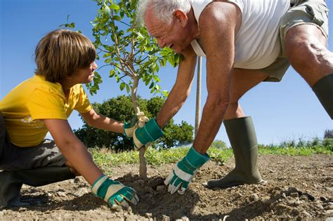 planting a tree its all about shannel plant a tree save a life