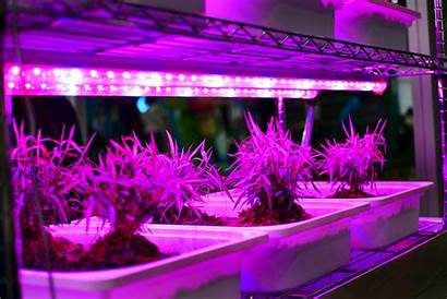 Grow Led Lights Lighting Plants Plant Indoor