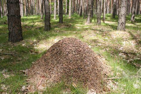 Ameisenhaufen Garten