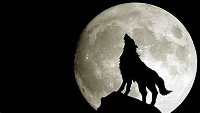 Wolf Wallpapers Moon Couple Snow Awesome