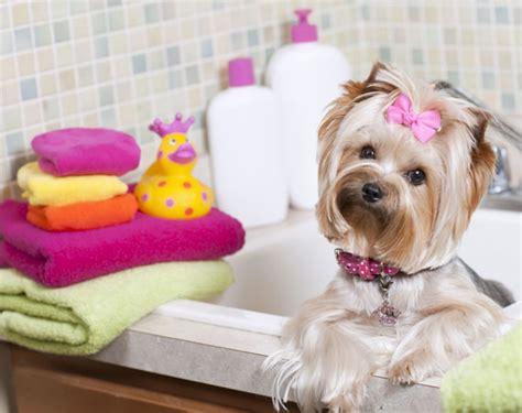 toiletter chien soi mme 28 images le bon coin une niche high tech pour chien tr 232 s