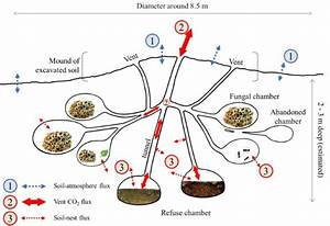 Leafcutter Ant Colonies May Be An Overlooked Source Of