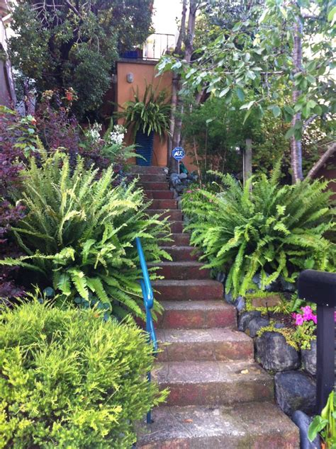17 best images about back yard on gardens