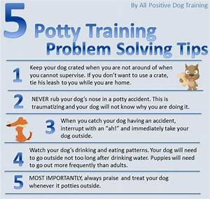 Potty training tips auggie pinterest for dogs for Dog potty training problems