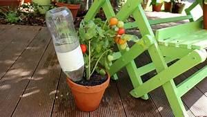 Pflanzen Bewässern Urlaub : so berleben eure pflanzen euren urlaub themen ~ Frokenaadalensverden.com Haus und Dekorationen