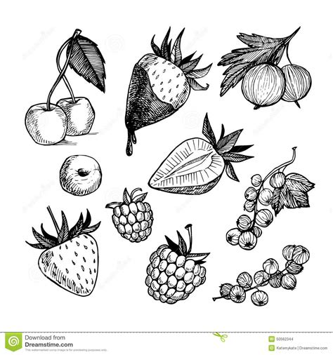 Handdrawn Vector Illustration Collection Of Berries Isolated Stock Vector  Illustration Of
