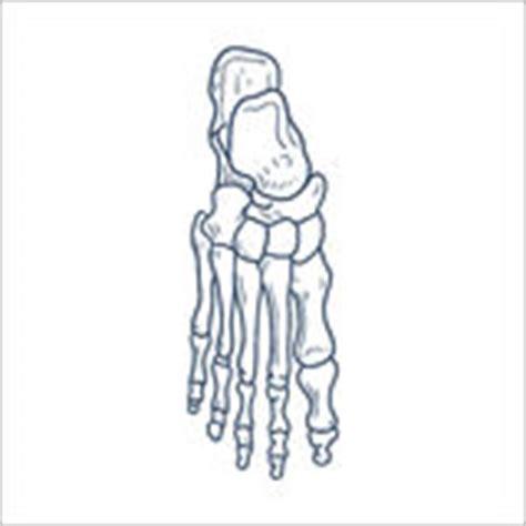 os de partie squelettique d isolement sur le blanc photo libre de droits image 37127805