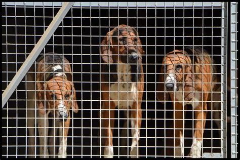 Drei Hunde Hinter Gitter Foto & Bild  Tiere, Haustiere