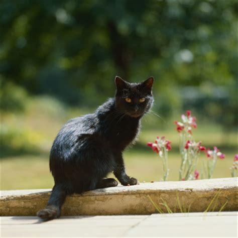 Welche Pflanzen Sind Für Katzen Giftig?