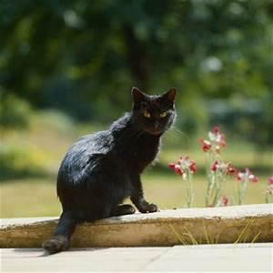 Welche Pflanzen Sind Nicht Giftig Für Katzen : welche pflanzen sind f r katzen giftig pflege medizin yaacool ~ Eleganceandgraceweddings.com Haus und Dekorationen