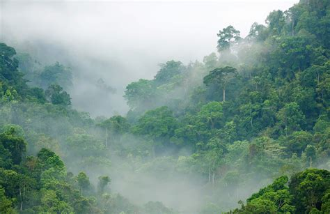 Misty Rainforest Wallpaper Mural Muralswallpapercouk