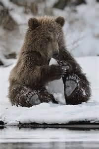 Animal Bear Paw