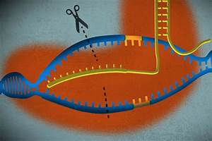 A Simple Guide To Crispr  One Of The Biggest Science