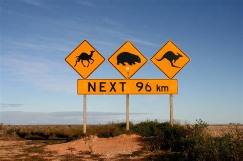 cuisiner le kangourou carnet de voyages australie shrink in the kitchen