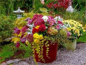 Kübel Bepflanzen Ideen : herbstblumen im k bel bilder und fotos pflanzen balkon blumen blumen und garten ideen ~ Buech-reservation.com Haus und Dekorationen