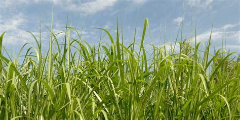 biomass energy information facts sciencefun