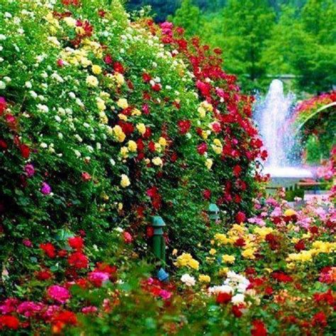 Rainbow Flower Garden Wwwprettyflowersme Beautiful