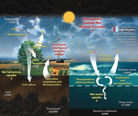 Carbon Cycle Wikipedia