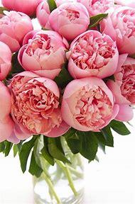 Happy Birthday Peonies Flowers