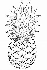 Pineapple Coloring Fruit Template Easy Pinapple Fruits Sheets Printable Drawing Adult Raskraska Pepper sketch template