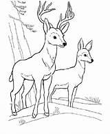 Deer Coloring Pages Printable Bestcoloringpagesforkids Via sketch template