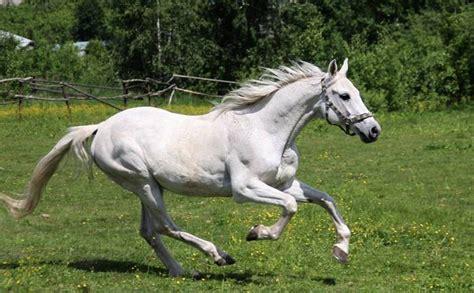 horses names horse snow fjord light