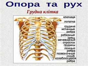 3 триместр беременности боль в тазобедренном суставе