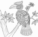 Coloring Hornbill Tree Bird Zentangle Paradise Tropical Decorations Drawing Adult Vector Drawings Getdrawings Children 33kb 1300 sketch template