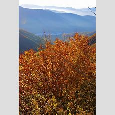 199 Best Fall Color In Nc Mountains Images On Pinterest