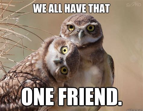 Meme Owl - 17 best ideas about funny owls on pinterest funny owl pictures pics of owls and my spirit animal