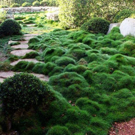 gardens inspiration tranquil havens nursery australia