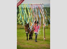 The Horse Agility Club Shop — The Horse Agility Club Curtain